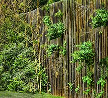 Just a Fence by soonerphoto