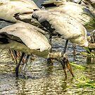 The Stork Gathering by imagetj