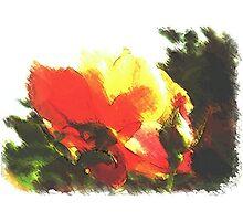 Simply, rose by OlaG