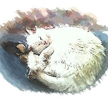 napping by OlaG