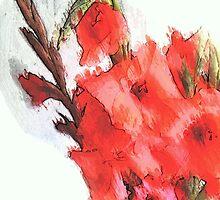 Gladiolus ...  by OlaG
