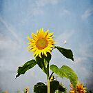 A Sunflower Up In The Sky by Denise Abé