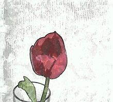 Tulip in a glass by OlaG