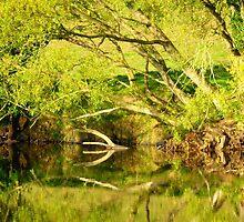 Riverside Reflections....................................N Ireland by Fara