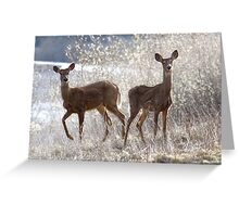 White-tailed Deers Greeting Card