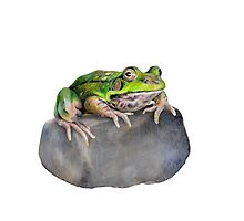 Green Frog on Rock by paulapaints