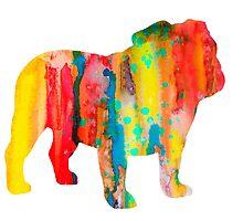 English Bulldog  by Watercolorsart