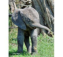 YES I'M DOING THE BABY ELEPHANT WALK - THE AFRICAN ELEPHANT – Loxodonta Africana Photographic Print