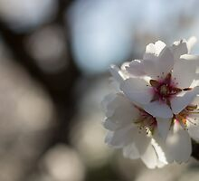 Blossoms in Bloom by Melissa Anne