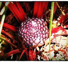 The Aloe Flower Bud. by mrcoradour