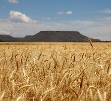 The Sentinel... Wheat fields by Qnita