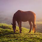 Horse on the Foggy Field by JennyRainbow