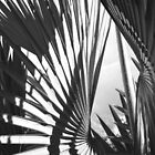 Palm Shapes  by globeboater