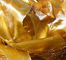 Golden seaweed - 2011 by Gwenn Seemel