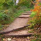 Autumn Trails by perkinsdesigns