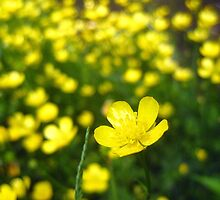 buttercup bokeh by LoreLeft27