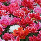 Happy Tulips by Lindie Allen