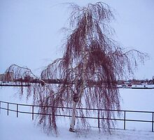 Willow in Winter by Francis LaLonde