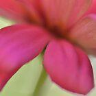 Pink Blur by Jean Poulton