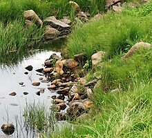 Rocky Stream by kathrynsgallery