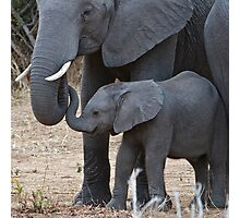 Love & Trust - Mother & Baby African Elephants Photographic Print