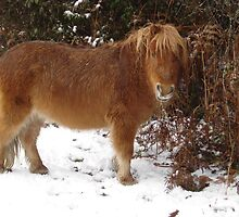 Miniature New Forest Pony in the snow by JeremyAnson