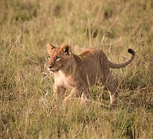 LION CUB READY FOR SOME PLAYTIME by marieleephoto