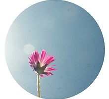 Silver lining circle ttv photograph by gailgriggs