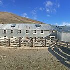 The Shearing Shed by Paul Campbell  Photography