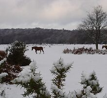 New Forest Ponies in the snow by JeremyAnson