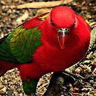 Bird with Attitude by myraj