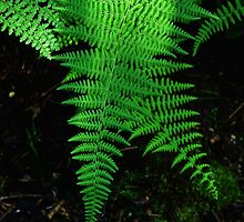 Ferns in the Light by Gilda Axelrod