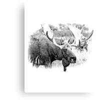Bull Moose. Wildlife Moose. Moose Antlers. Canadian Moose. Alaskan Moose. Canvas Print