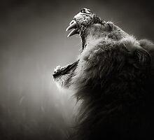 Lion close-up by johanswanepoel