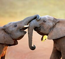Elephants touching by johanswanepoel