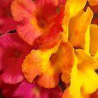Macro mini flowers by Stacie Forest