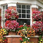 Window flowers (2) by lezvee
