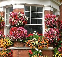Window flowers (2) by lezvee