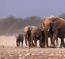 Elephant herd by johanswanepoel