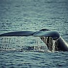 Tail of the Humpback Whale (Megaptera novaeangliae) by Deborah V Townsend