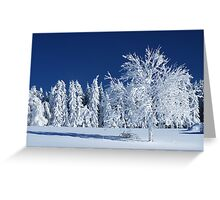 The Snow Paradise Fir Trees Greeting Card