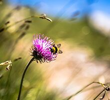 Nectar Chase by Colin Cianelli
