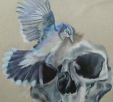 Blue Jay and Skull by Virginiasanimal