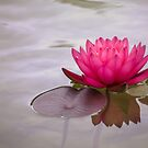 Serenity in pink by Celeste Mookherjee