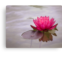 Serenity in pink Canvas Print