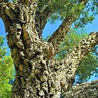 Cork Tree by Penny Smith
