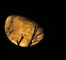 Winter Moon and Silhouetted Tree by trueblvr