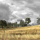 Grey Skies by janewiebenga