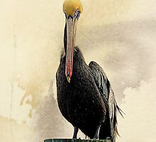 The Plight of the Pelican by Susan Werby
