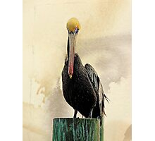 The Plight of the Pelican Photographic Print
